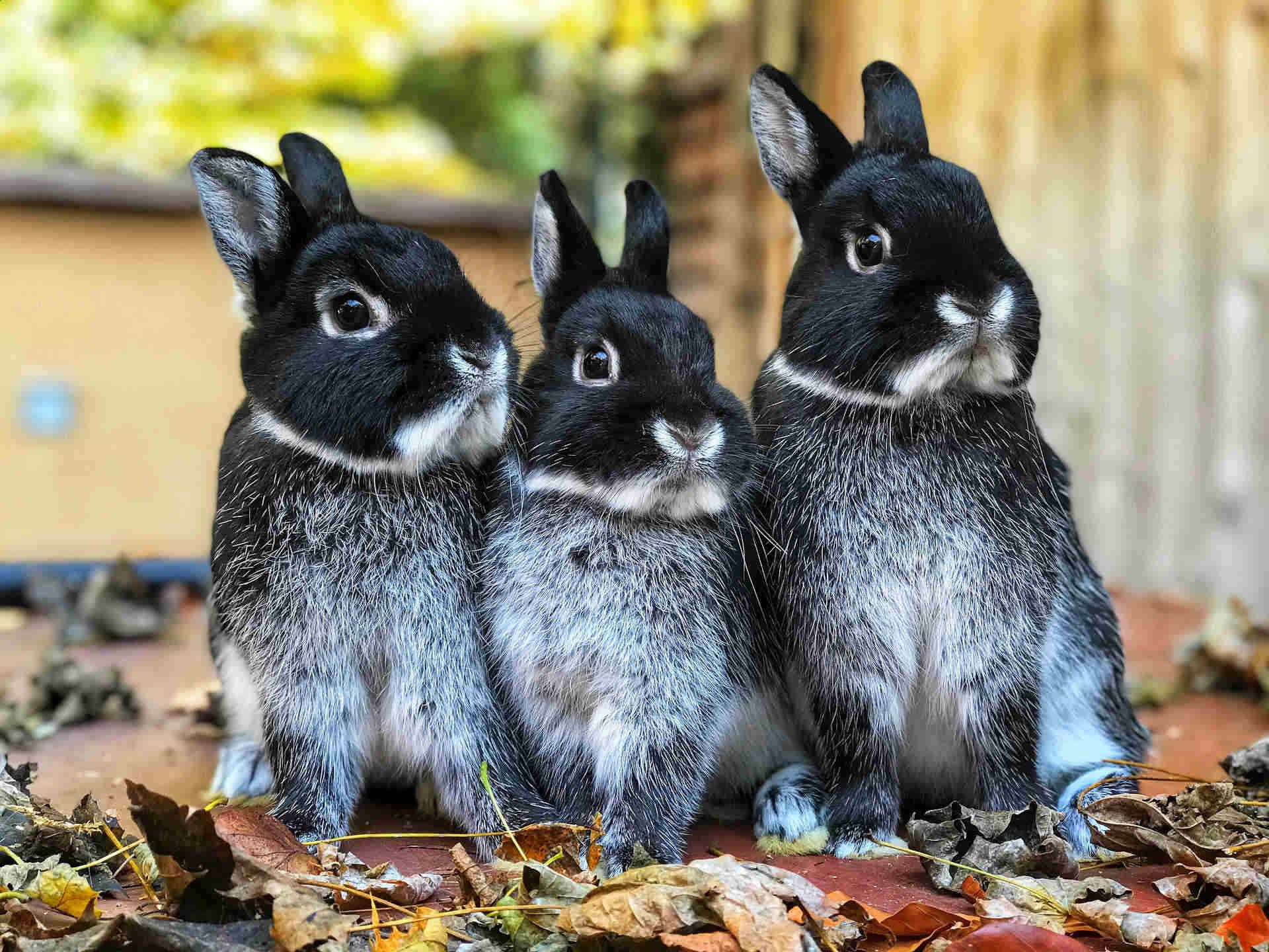 Vybíráme králíčka: Samečka, nebo samičku?