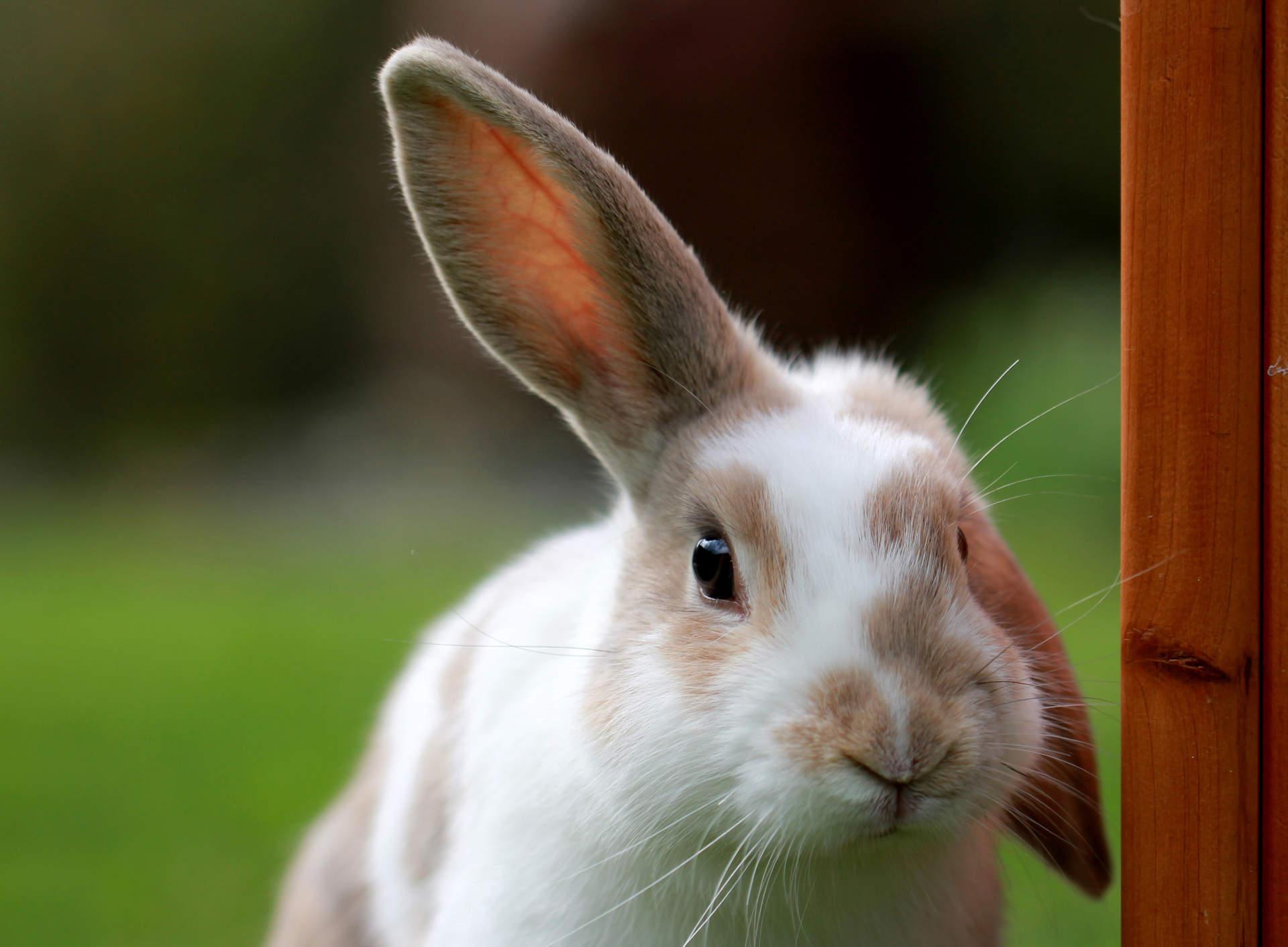 Nejlepší pamlsky pro králíčky a morčátka