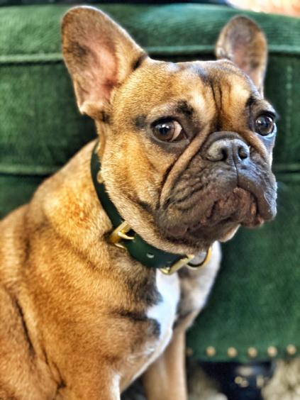 Kožený obojek PONER DOG