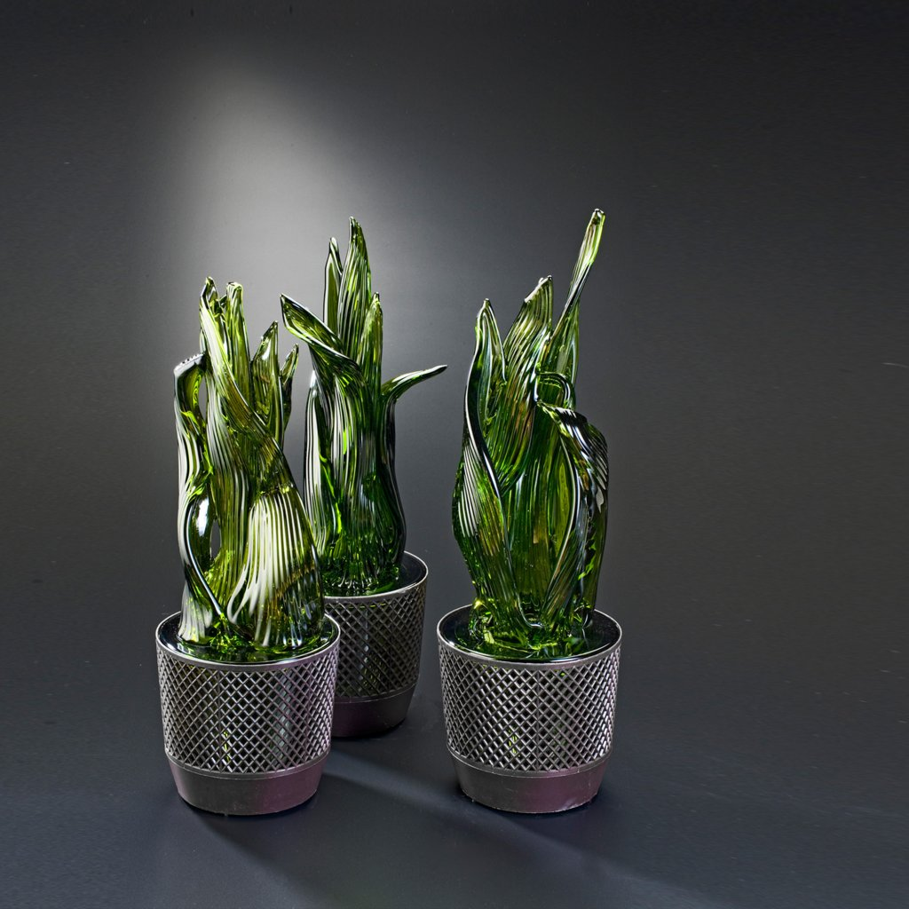 qubus jakub berdych karpelis snake plants 1