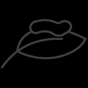hedvabi