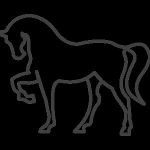 ikony-konske-zine