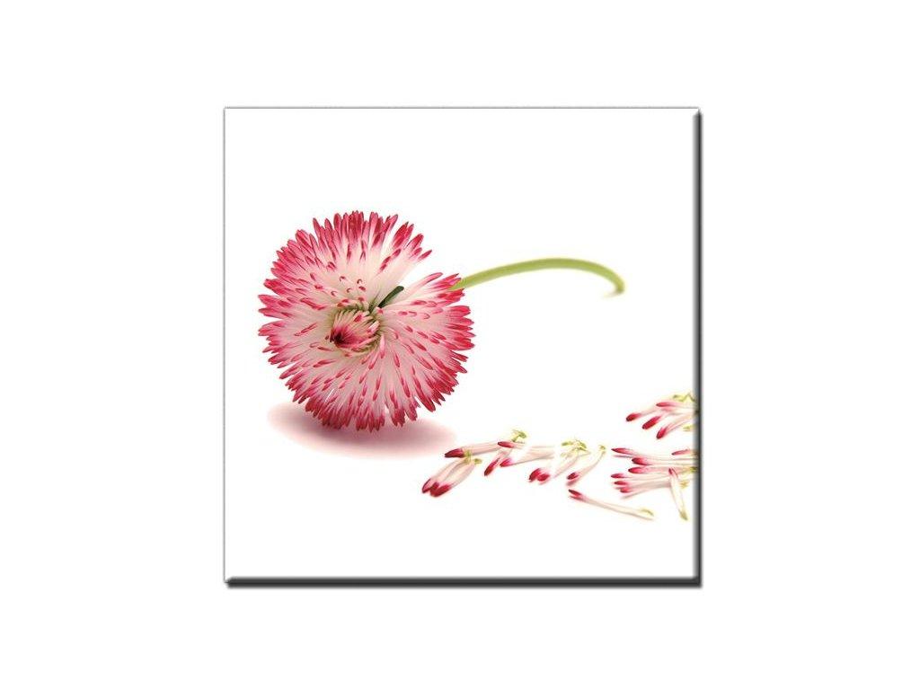 Obraz Stardeco Pink Air 60x60 - PA107
