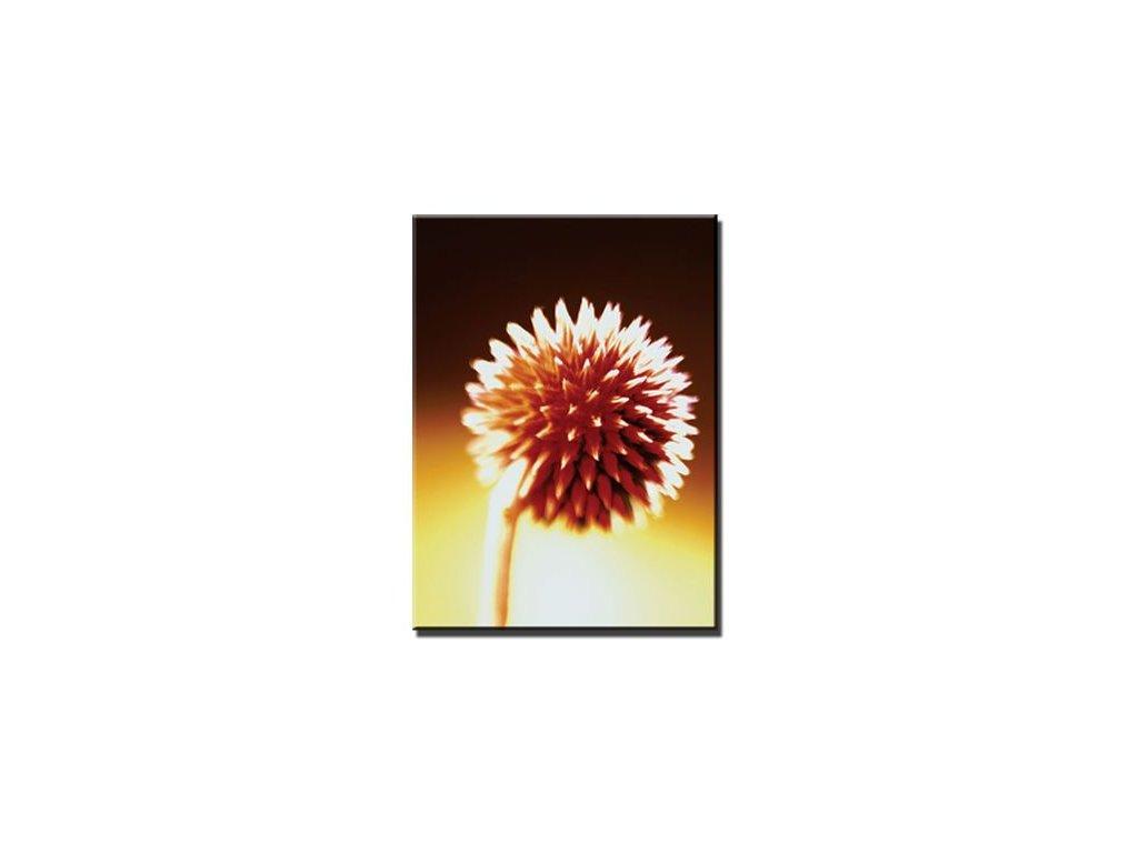 Obraz Stardeco Scarlet 60x80