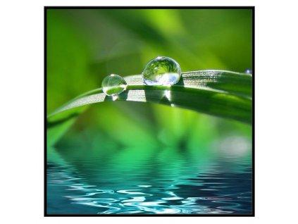 Obraz Stardeco Dew drop 60x60