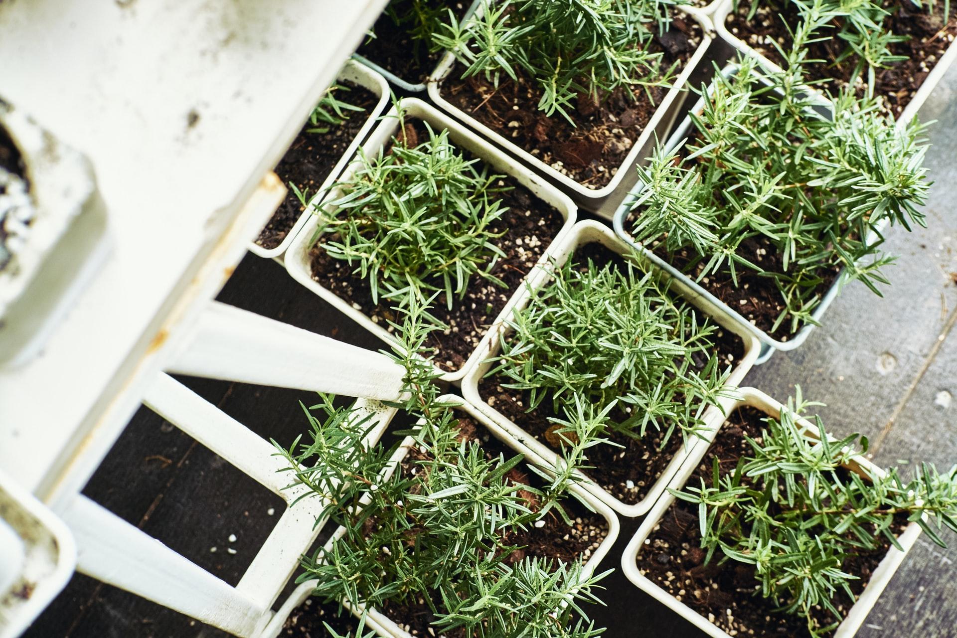 Milujete bylinky? Prozradíme, co je bylinková spirála a jak na pěstování bylinek v květináčích
