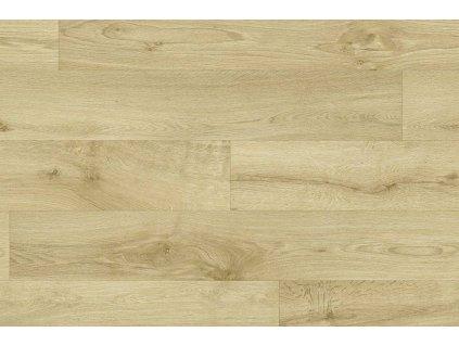 Willow oak 163M