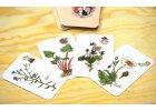 36 bylinkových karet