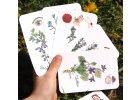 36 hracích karet s bylinkami