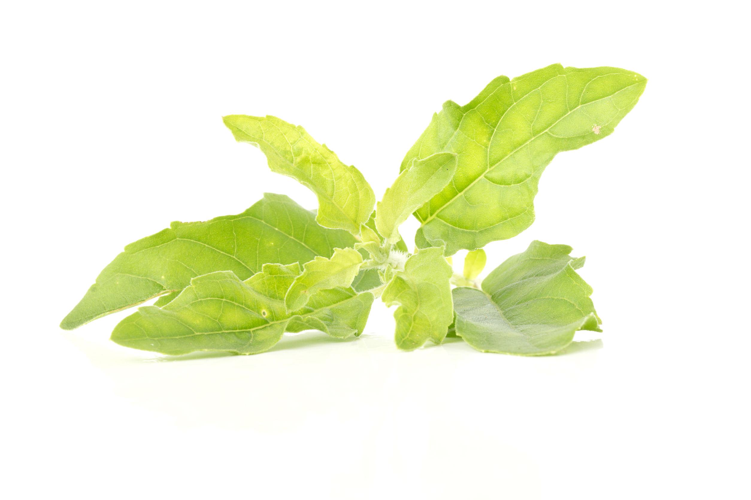Svatá Bazalka - nepostradatelná synergická bylina
