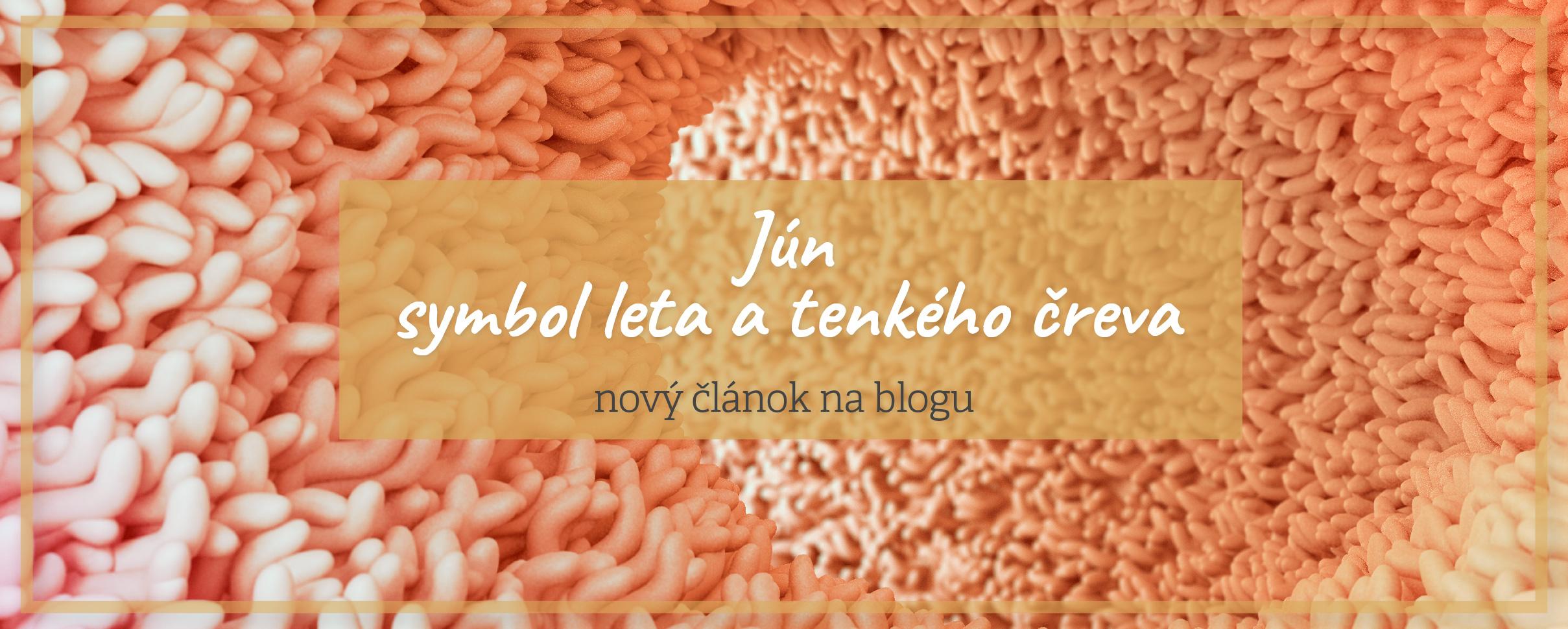 Blog tenké črevo zdravie