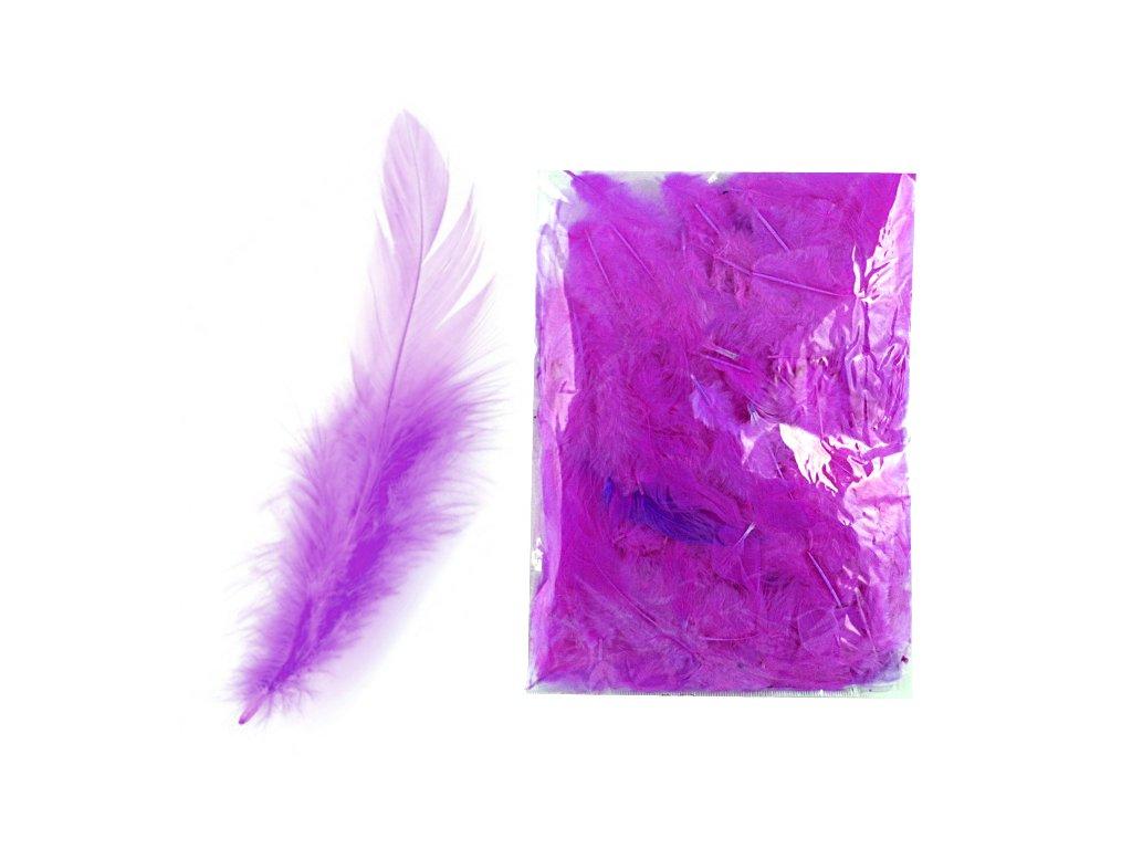 Peří fialové