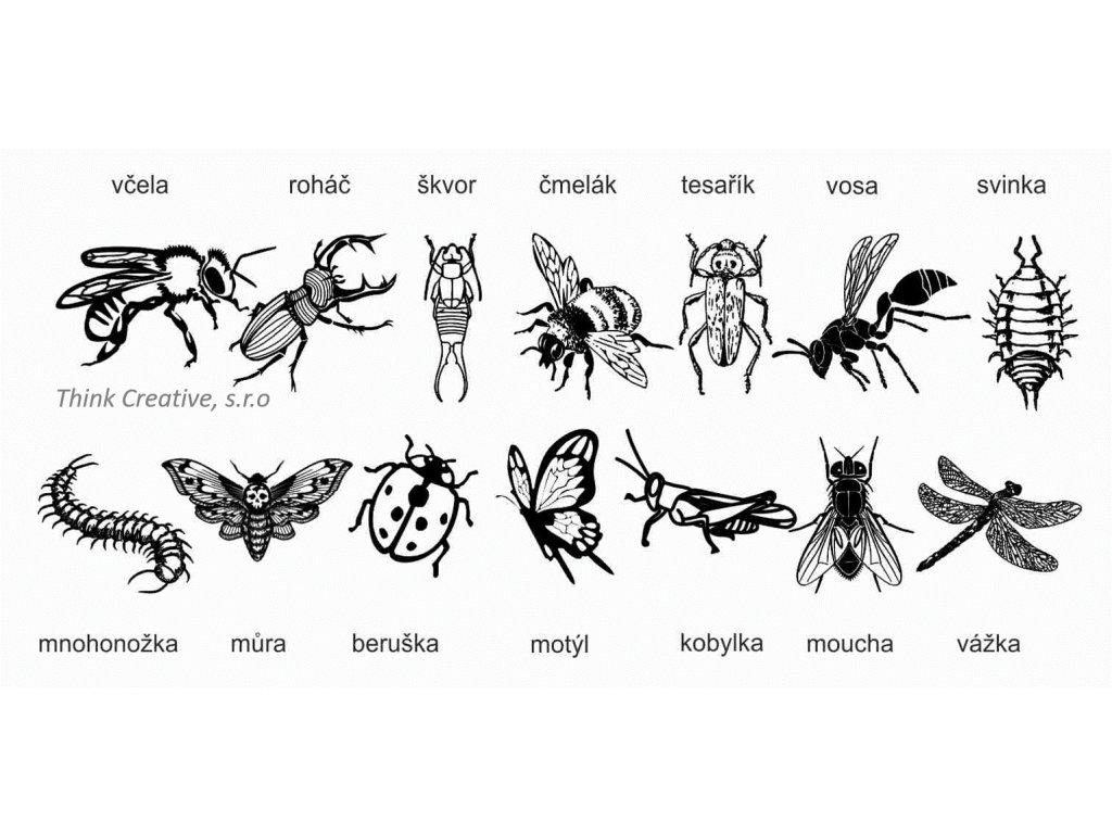 Razitka hmyz TC