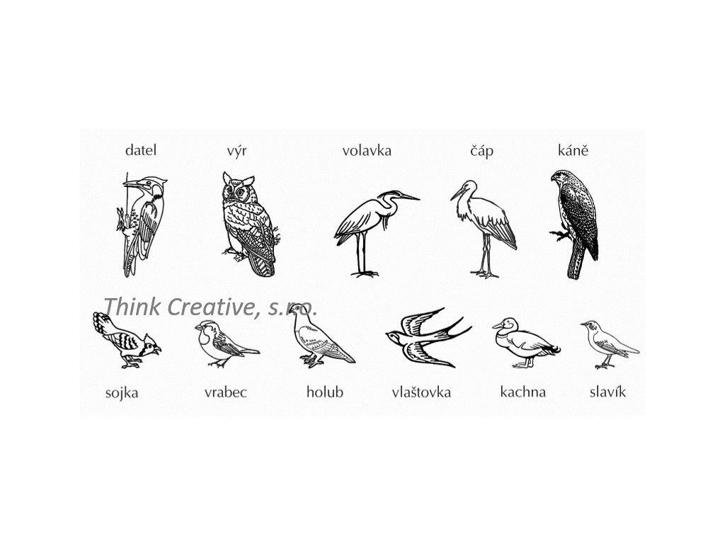 Razitka ptáci TC