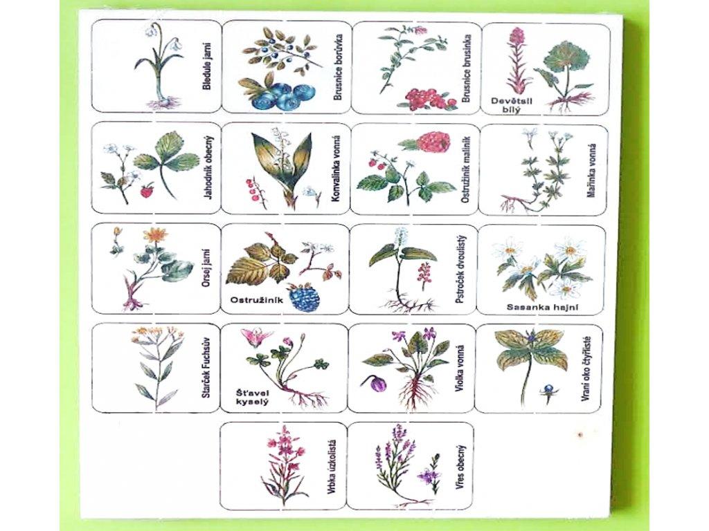 Pexeso dřevěné – lesní rostliny