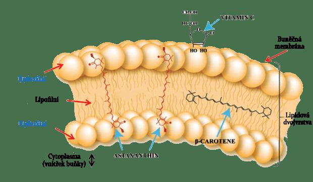 MolekulaAstaxanthin