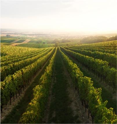 Výlety na rakouské vinice
