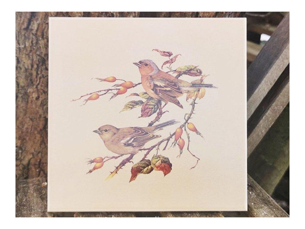 obklady selske 15x15 bezove ptacek penkava
