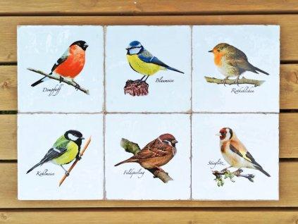 Forli obklad lesklý postaršený Ptáci našich zahrad 15x15 nebo 20x20 - sada 6 ks