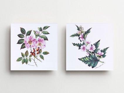obklady bylinky obtisky malovane bila lesk sada sipkova ruze