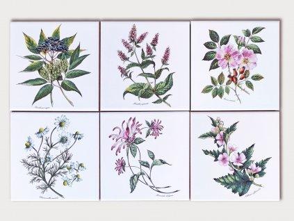 obklady bylinky obtisky malovane bila lesk