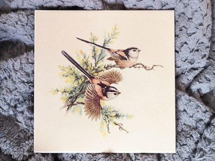 obklady selske 15x15 bezove ptacek mynarik