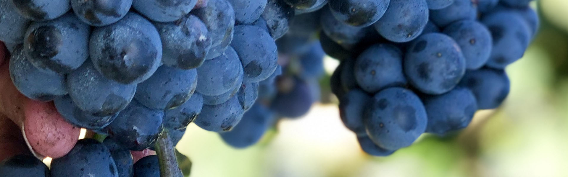 animace vino1