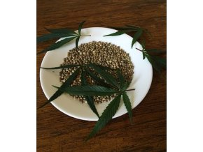 cannabis seeds 1418321 340
