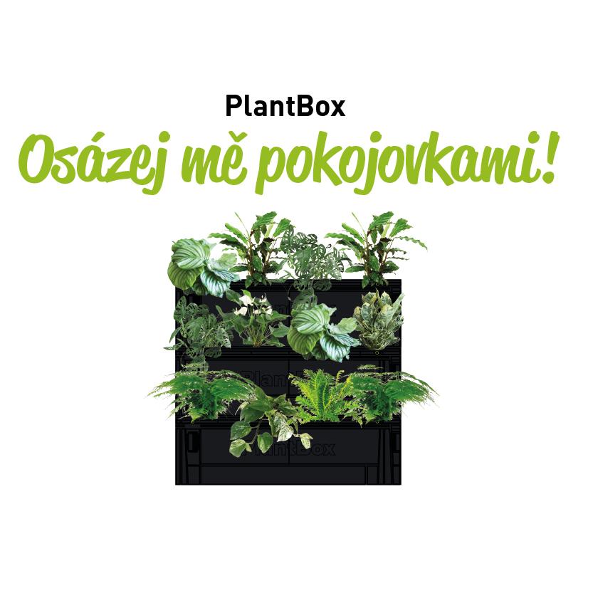 osazovaci_plan_ziva_stena_12