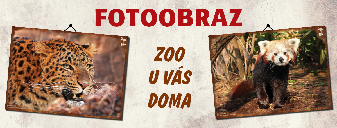 Fotoobraz - zoo u vás doma!