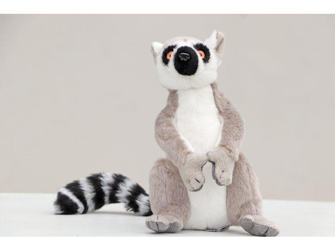 lemur hladky