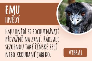 Emu hnědý
