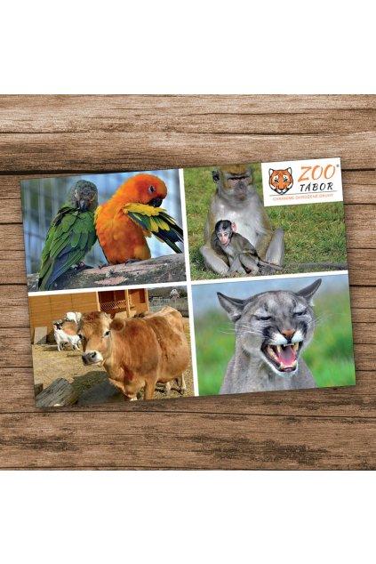 pohlednice 4kamaradi2