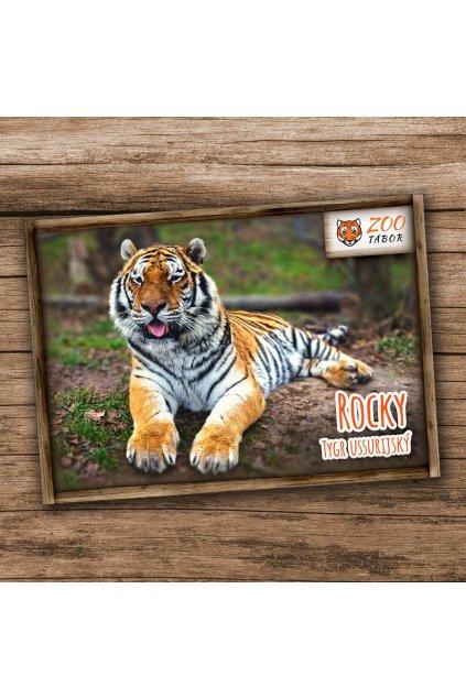 pohlednice n tygr