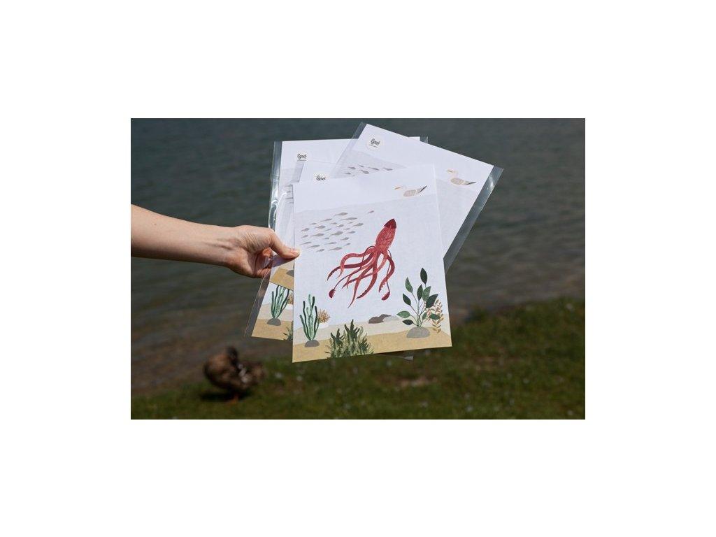 6005 egres chobotnice a4print
