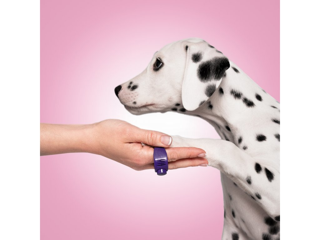 kliker prsteň fialový