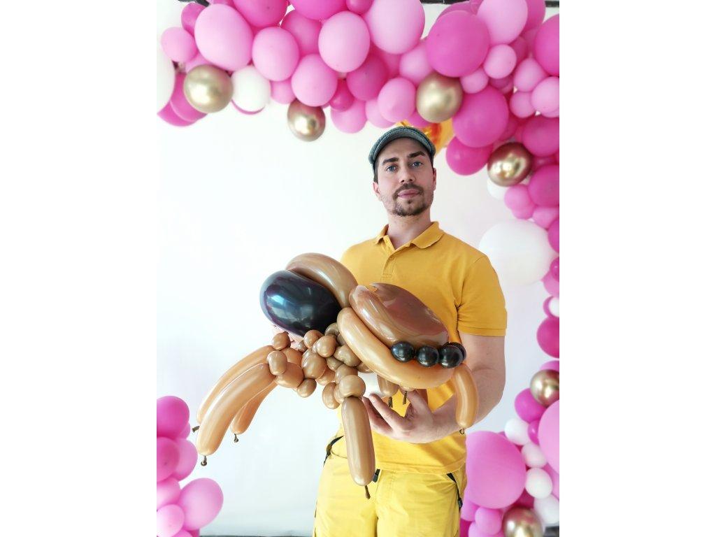 drak dráček dragon balloon balonky balonků narozeninové párty děti s dětmi dinosaurus slon slůně sloník slona pavouk pavouček spider balloon vdova sklípkan johana (1)