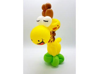 žirafa dárek z balónků (2)