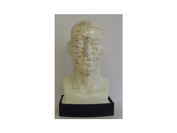 Akupunkturní model - hlava 1 ks