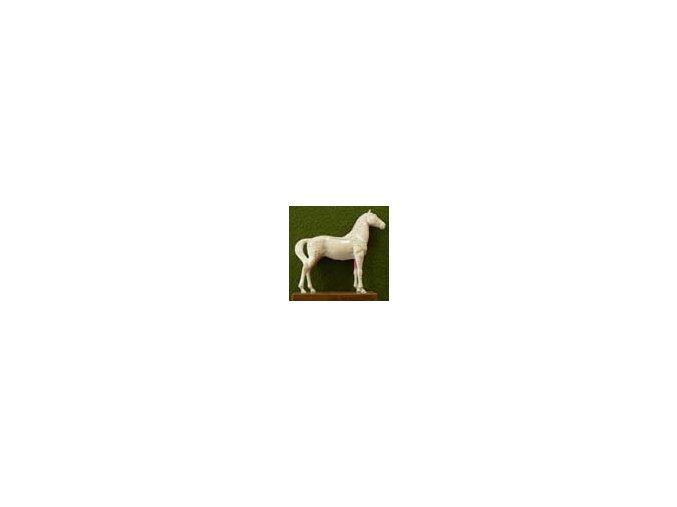 Akupunkturní model - kůň 1 ks
