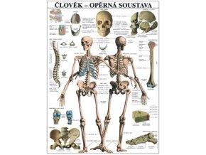 Plakát člověk opěrná soustava  - 67 cm x 97 cm