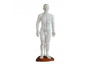 Akupunkturní model - muž - 50 cm
