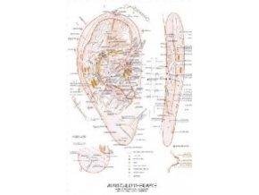 Auriculotherapie - 46 x 63 cm