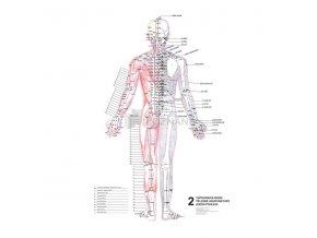 Mapy - topografie bodů tělesné akupunktury 3 ks - plakáty jsou o rozměrech 47 x 63 cm