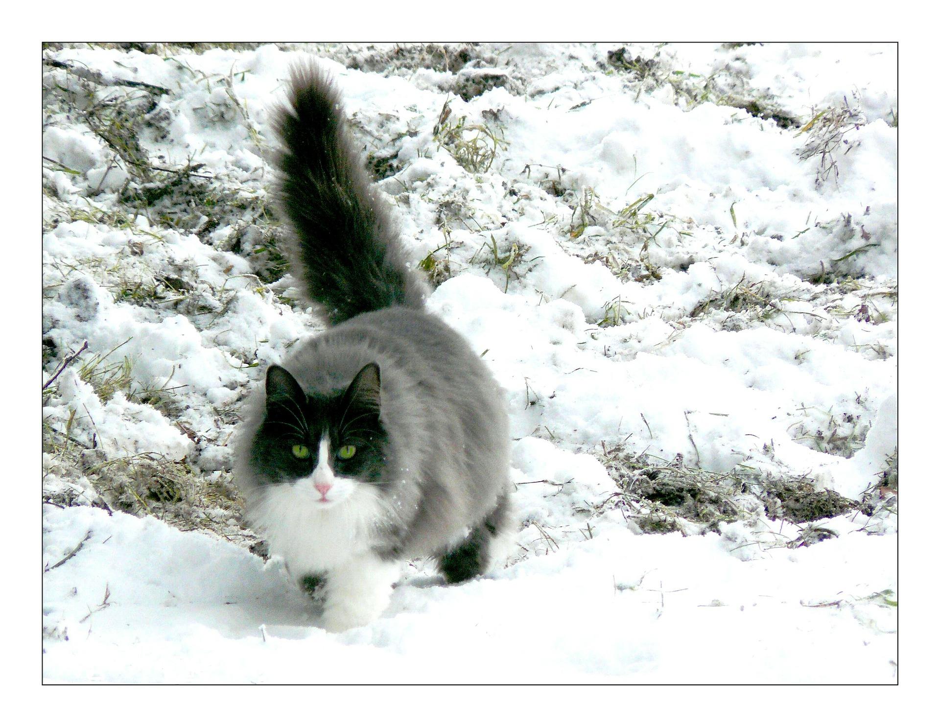 Jak rychle a důkladně odstranit kočičí moč