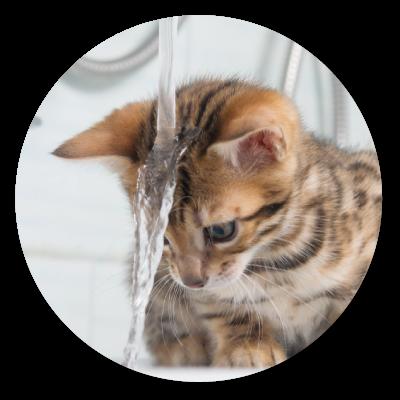 Šampony pro koupání kočky