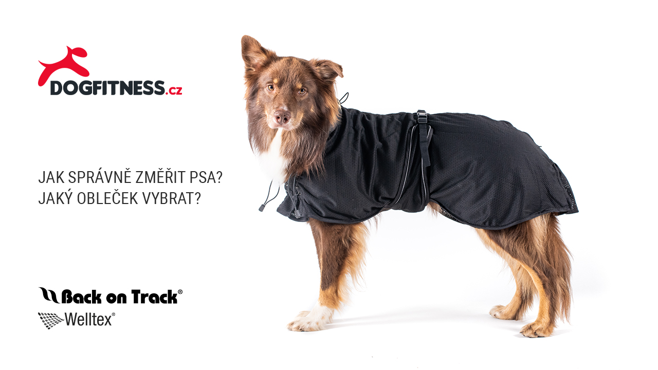 Back on Track pro psy - jak správně změřit psa a jaký obleček vybrat? (video)