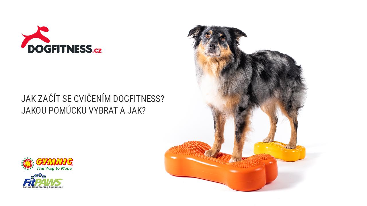 Dogfitness základy (video)