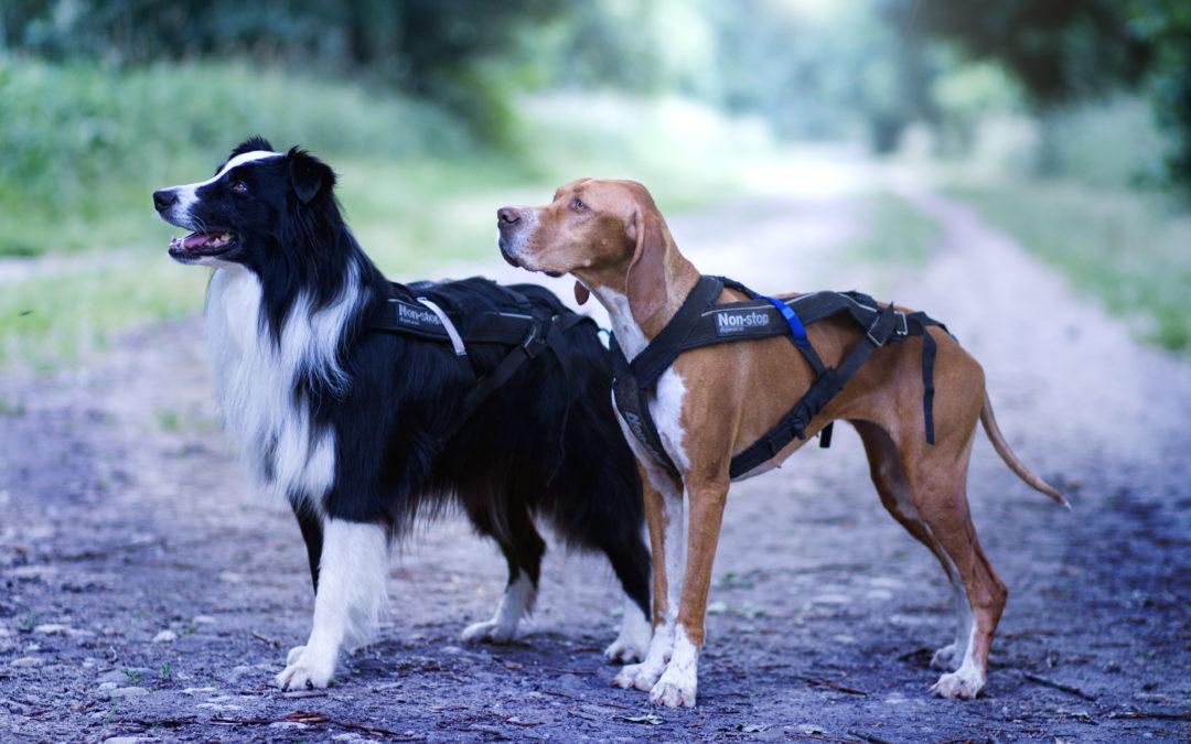 Postroj Non-Stop Dogwear Freemotion