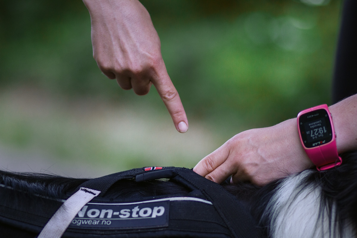 Pokud postroj natáhnete za očko směrem k ocasu, v oblasti kohoutku by se vám pod něj měly vejít přesně 2 prsty.